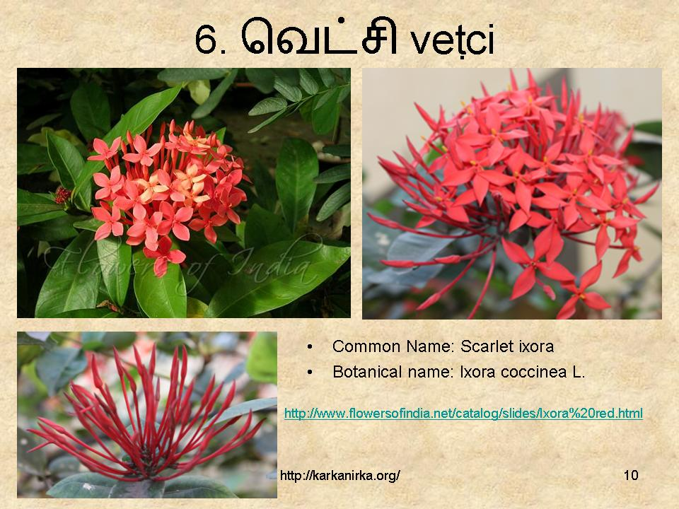 flowers name list in tamil - photo #5