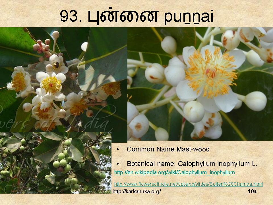flowers name list in tamil - photo #40