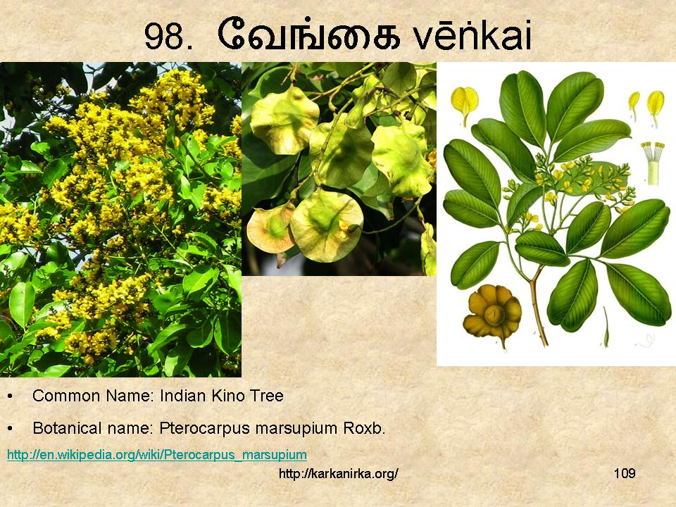 Flowers Name: 25 Fresh Trees Names In Tamil And English With Pictures