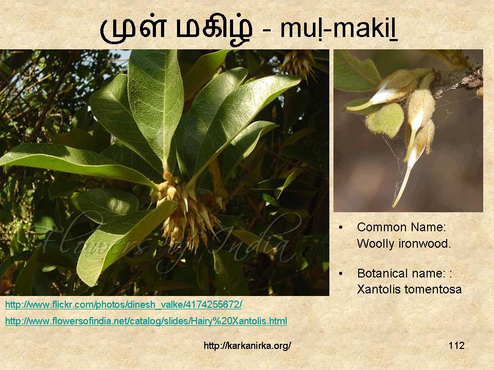 flowers name list in tamil - photo #12