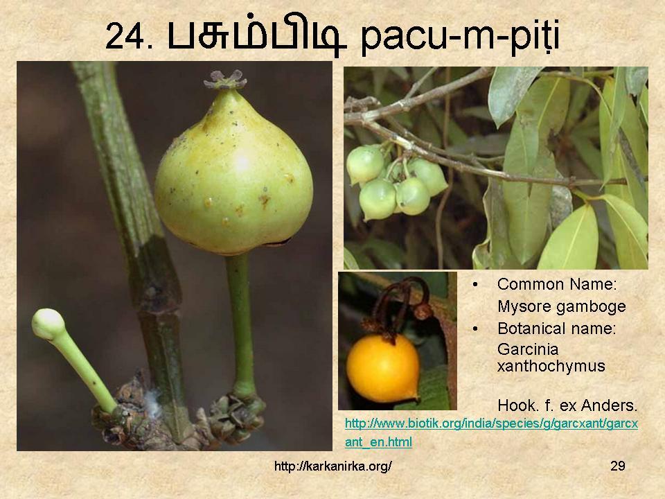 99 Tamil flowers – Kurunjipaatu – flowers 21-30 – கற்க