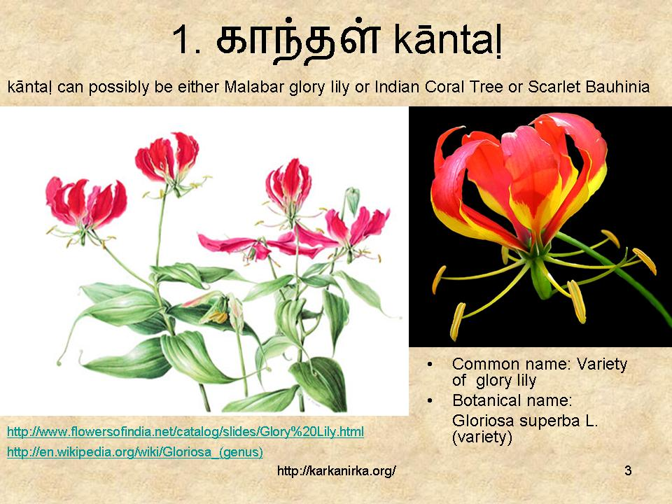 flowers name list in tamil - photo #11