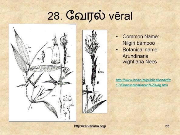 குறிஞ்சிப்பாட்டில் 99 மலர்கள்:பட்டியல் நிறைவு பெற்றது ! - Page 2 Slide33