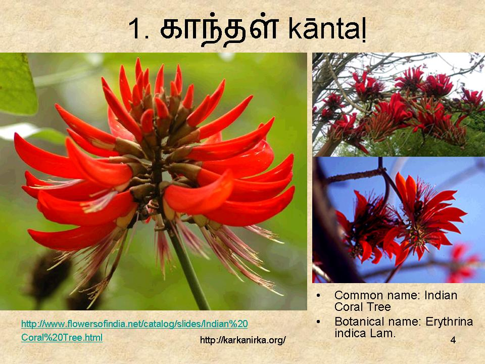 flowers name list in tamil - photo #16