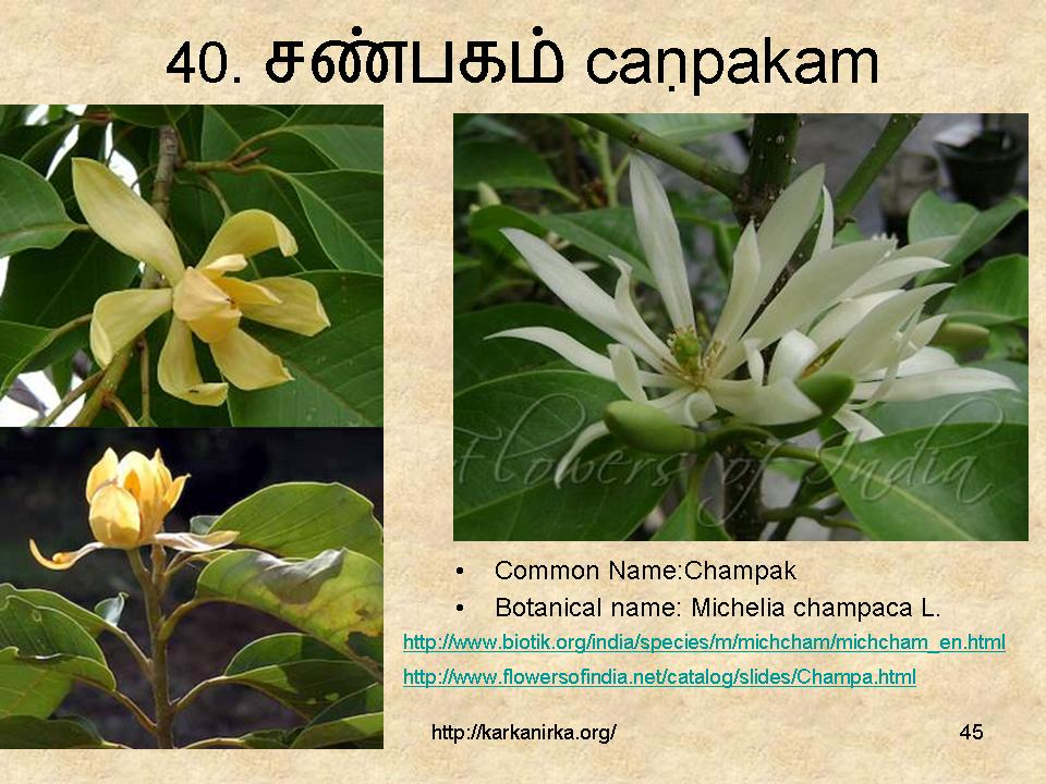flowers name list in tamil - photo #17