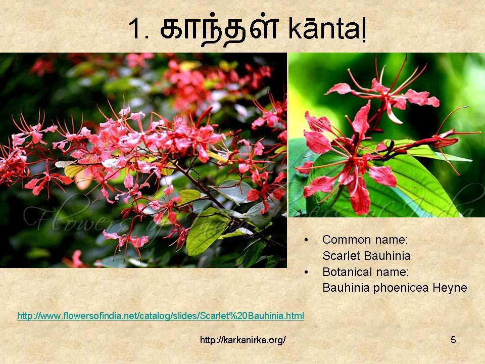 99 Tamil flowers – Kurunji paatu – flowers 1-10 – கற்க… நிற்க …