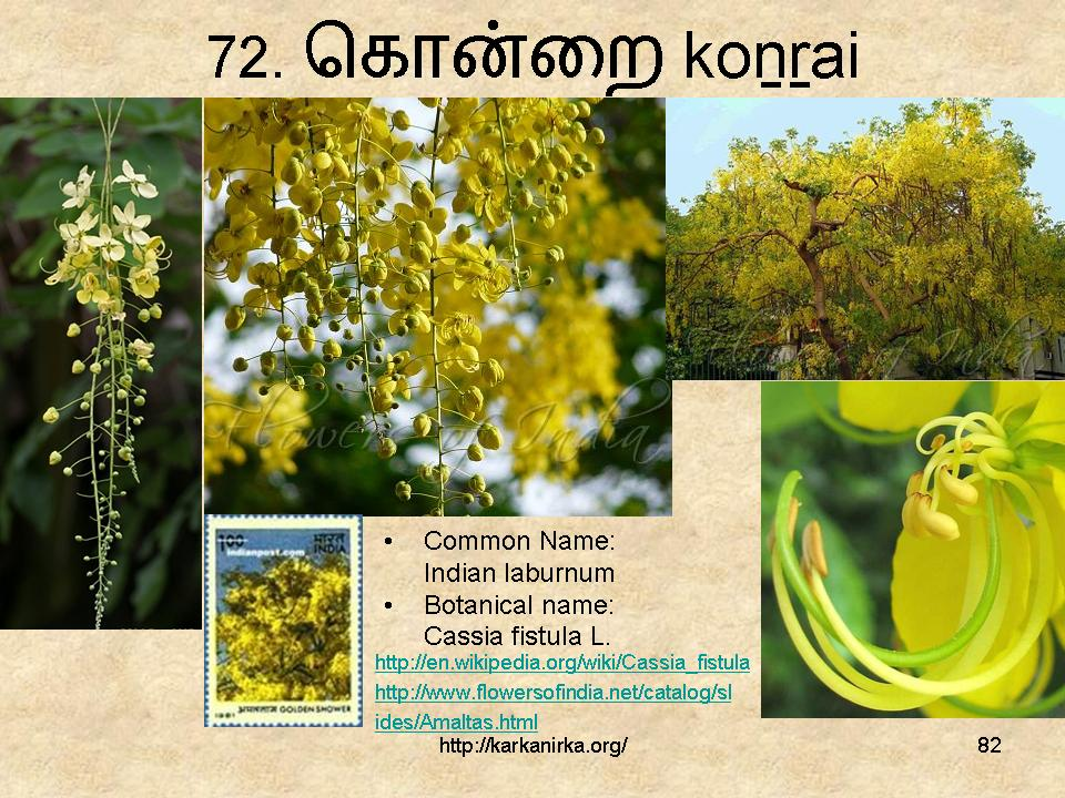 flowers name list in tamil - photo #22