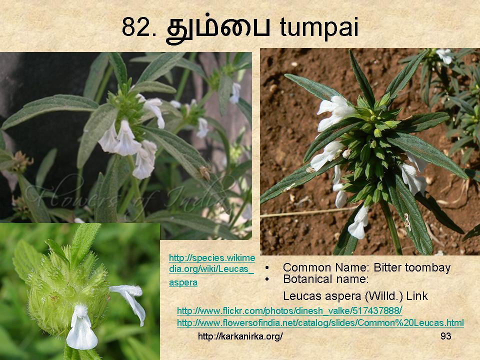flowers name list in tamil - photo #35