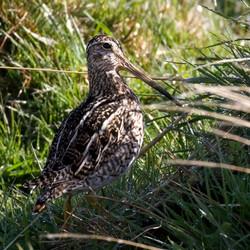 Tamil Birds – Different types of kuruvi – Part 2 – கற்க