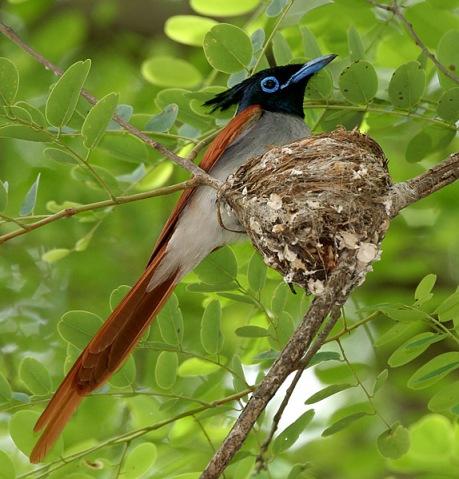 Tamil Birds – Different types of kuruvi – Part 1 – கற்க